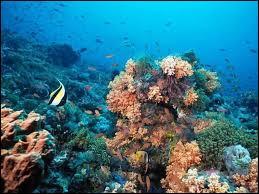 Parmi ces océans, lequel se trouve non loin des îles Sandwich ?