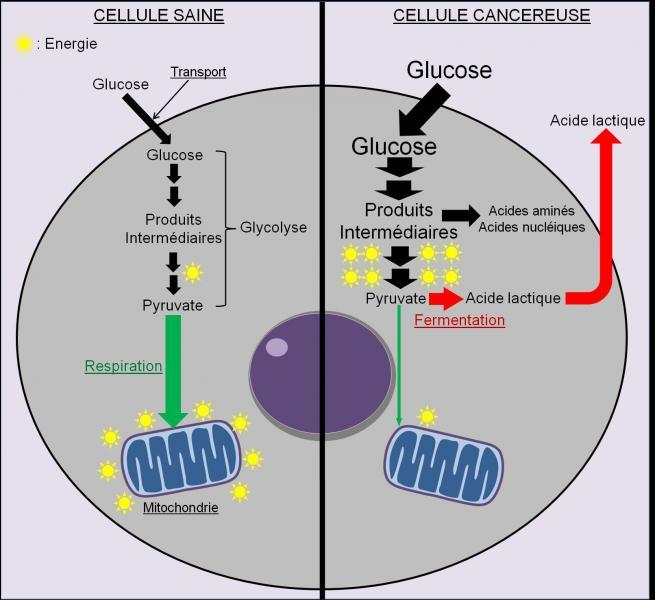 Le saccharose empêche la prolifération des micro-organisme et préserve les couleurs des fruits. Autrement dit, il a une fonction de :