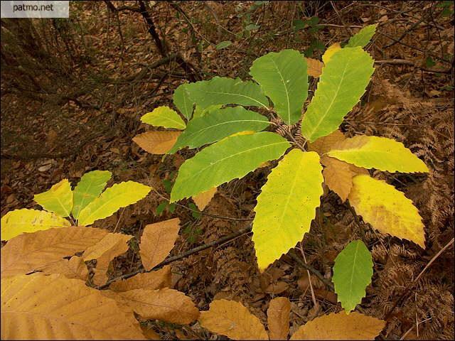 Rendez ces feuilles à son arbre :