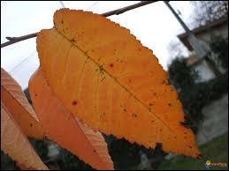 Et pour finir ce fascinant spectacle d'automne, que sont celles-là ?