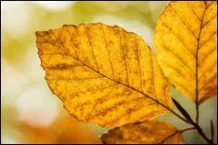 Que sont ces feuilles, revêtues des couleurs de l'automne ?