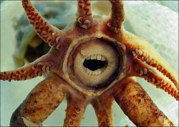L'étoile de mer a trois cerveaux !