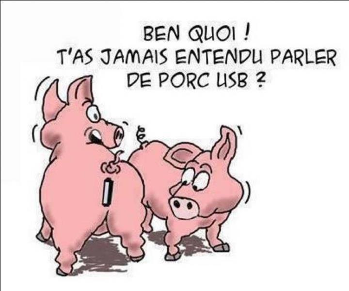 L'orgasme du porc dure trente minutes !