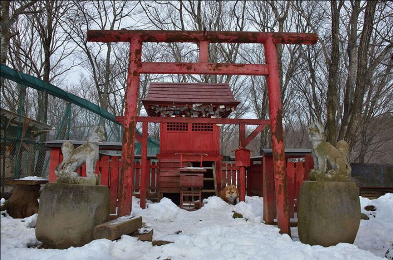 Au Japon, le village de Zao Kitsune Mura est habité par des locataires qui sortent de l'ordinaire !