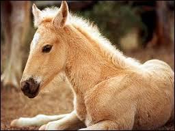 Laquelle de ces parties ne fait pas partie de la tête du cheval ?