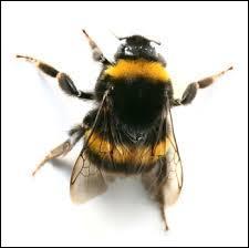 Il est plus connu qu'on pourrait le croire au premier abord ! Qui se cache derrière cet insecte ?