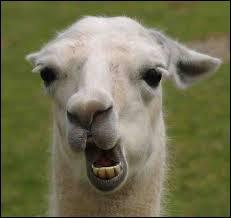 L'animal en photo vous renseigne sur le nom de famille...Quel est le prénom du chanteur ?