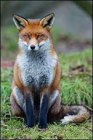 Tout le monde connaît l'animal mais connaissez-vous le prénom qui s'accorde avec ce nom de famille ?