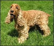 Ce n'est pas la race de chien la plus difficile à trouver ! Quel est le prénom de cette star ?