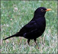 Là, il faut s'y connaître en ornithologie et en littérature pour faire la bonne association !