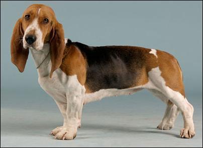 J'allais oublier cette autre race de chien ! Quel est le prénom de cette idole des années 50 ?