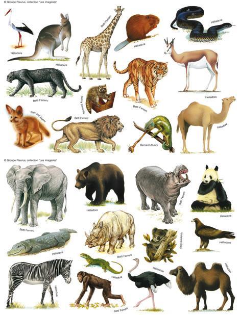 Ils portent des noms d'animaux !