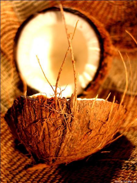 """Il faut travail et patience avant de déguster ce fruit ! D'abord, percez au niveau de la """"bouche"""" située sous les """"yeux"""" (trois taches brunes) puis recueillez le liquide dans un bol. Ouvrez la coque vidée à l'aide d'un marteau. Vous l'avez reconnue, c'est..."""