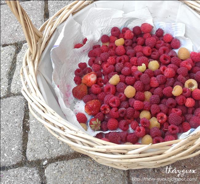 Ce petit fruit à saveur sucrée accompagnée, selon les variétés, d'une pointe d'acidité, est fragile et délicat. Présenté dans le commerce en barquettes pour le protéger des chocs, c'est...