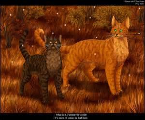 Quels sont ces chats ?