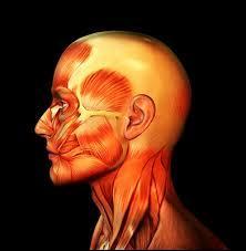 De combien d'os est composé le crâne ?