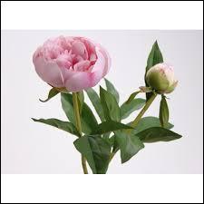 Connaissez-vous le nom de cette fleur ?