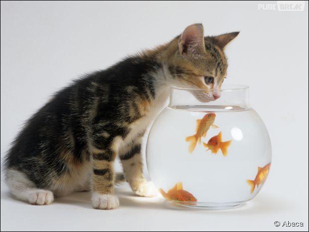 Terme de pêche. Tonneau qui sert à transporter des poissons vivants :