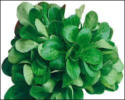Qui va trouver le nom de cette salade ?