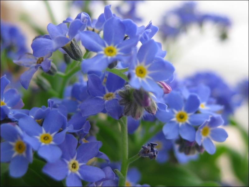 Donnez-moi le nom de ces fleurs :