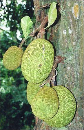 Quel est le nom de ce fruit exotique ?