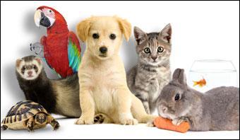 La phobie ou la peur des animaux en général.