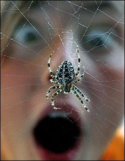 La phobie ou la peur des araignées.