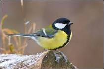 Combien y a t-il d'espèces d'oiseaux en France métropolitaine ?