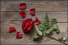 """Qui est l'auteur du poème """"Il n'y a pas d'amour heureux"""" ?"""