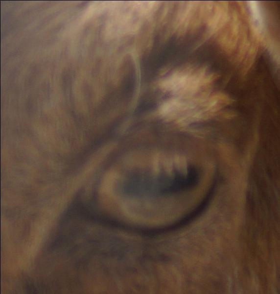 À qui appartient cet œil ?