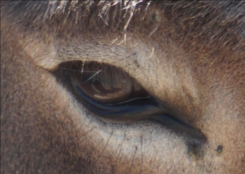 Yeux d'animaux