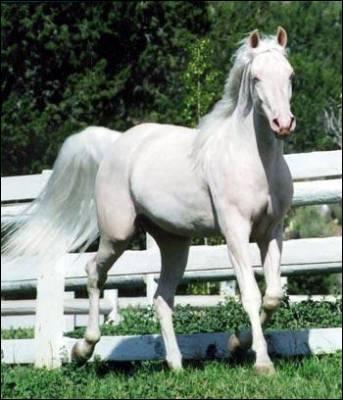 Un cheval blanc a les yeux :