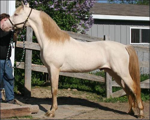Ce cheval a pour robe :