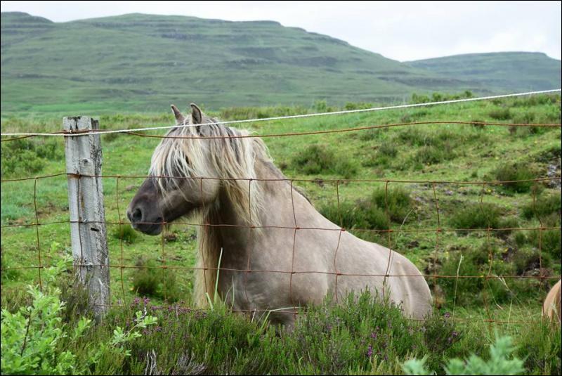 Ce cheval a pour base le noir mais il a des gènes de dilution, donc sa robe est :