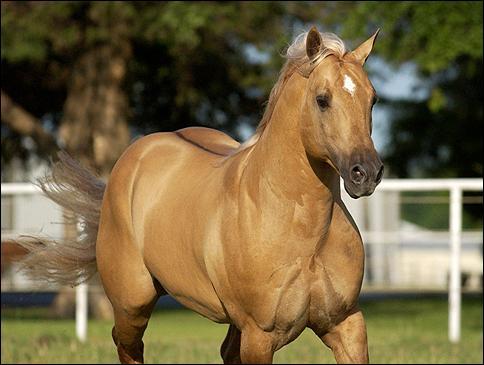 Un cheval ayant un gène dun a obligatoirement :