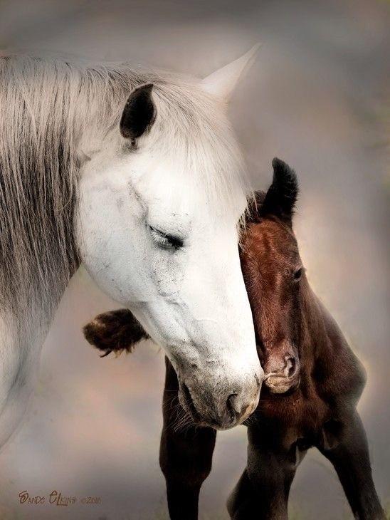 Robes des chevaux (La génétique)