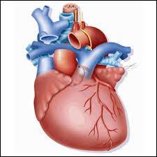 Quel médecin a pour spécialité la chirurgie cardiaque ?