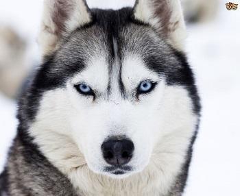 Résultat de recherche d'images pour 'image de chien'