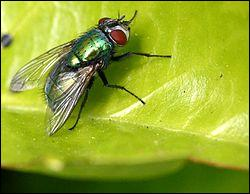 Pour commencer ce quiz de merde, je vous propose de donner le nom de cet insecte !