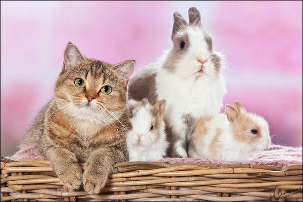 Voici la famille lapin ! Ils sont quatre !