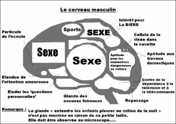 Parlez-moi des capacités du cerveau. (Agrandissez l'image) ^^