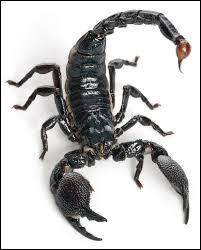 De quelle famille les scorpions font-ils partie ?