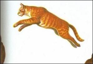 Quel est ce chat roux ?