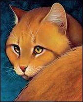 Ce chat-ci est très connu. Quel est son nom ?