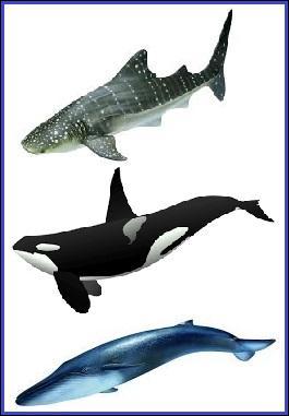 Quel est le plus grand poisson vivant actuellement dans nos océans ?