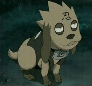 Comment s'appelle ce chien qu'on ne voit qu'une seule fois (dans les shippudens) ?
