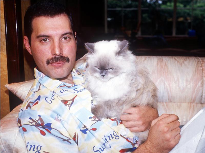 """Le chanteur Freddie Mercury du groupe Queen a fait paraître une chanson sur son album """"Innuendo"""" appelée """"Delilah"""" dédié à son chat du même nom."""