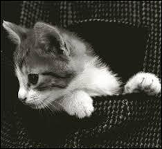 """L'expression """"Acheter chat en poche"""" signifie qu'on achète un objet dans le noir."""