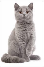 """En argot, le chat est appelé """"greffier""""."""