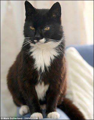 Le records de longévité d'un chat est détenu par Creme Puff qui est mort à l'âge de 38 ans.